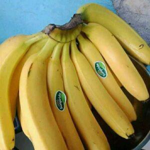pisang cavendis